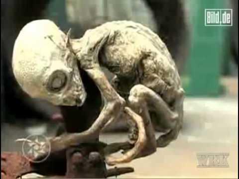 إكتشاف مخلوق غريب في المكسيك .. والعلماء يقولون أنه من الفضاء !!