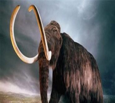العثور على ناب ماموث عمره لا يقل عن مليون سنة