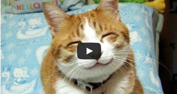 بالفيديو: لقطات جميله ومضحكه لقطط خفيفة الظل