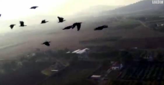 بالفيديو .. اكتشاف سر تحليق الطيور على شكل حرف V