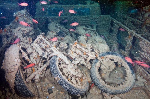 بالفيديو .. سفينة غارقة بمياه البحر الأحمر مليئة بالسيارات