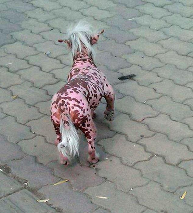 حيوان غريب يثير الرعب في الصين !!