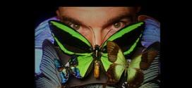 رجل استرالي يعيش على الفراشات لمدة شهر