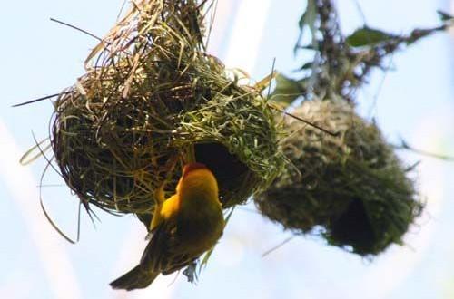 الطيور والنساء بالإهتمامات ذاتها بأثاث المنزل