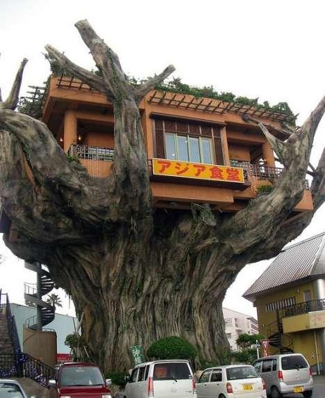 """عجائب"""" بيوت الأشجار """""""