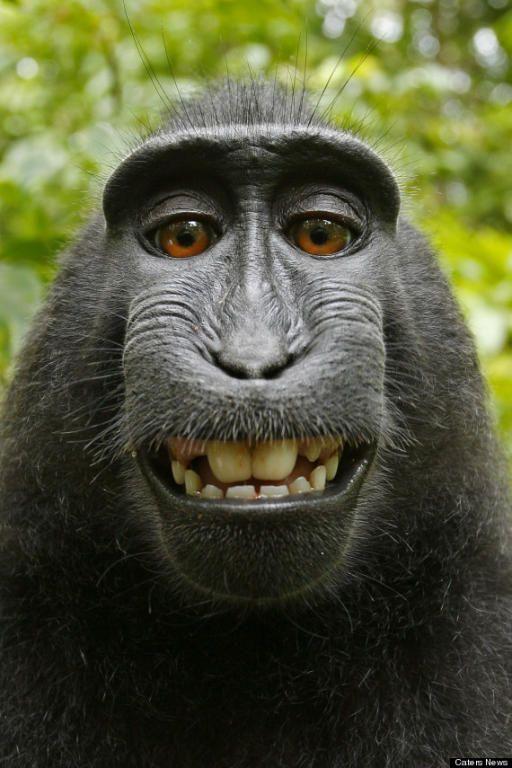 سيلفي القرد