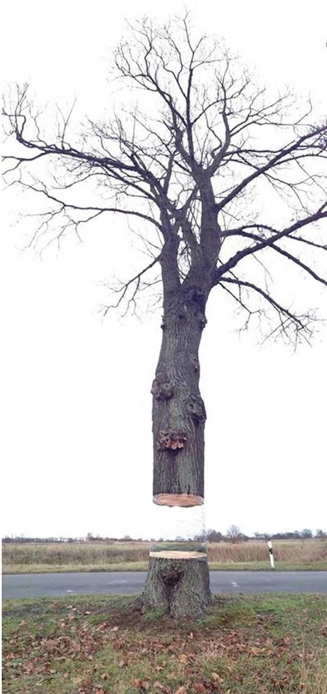 شجرة في ألمانيا تطفو في الهواء