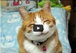 لقطات جميله ومضحكه لقطط خفيفة الظل