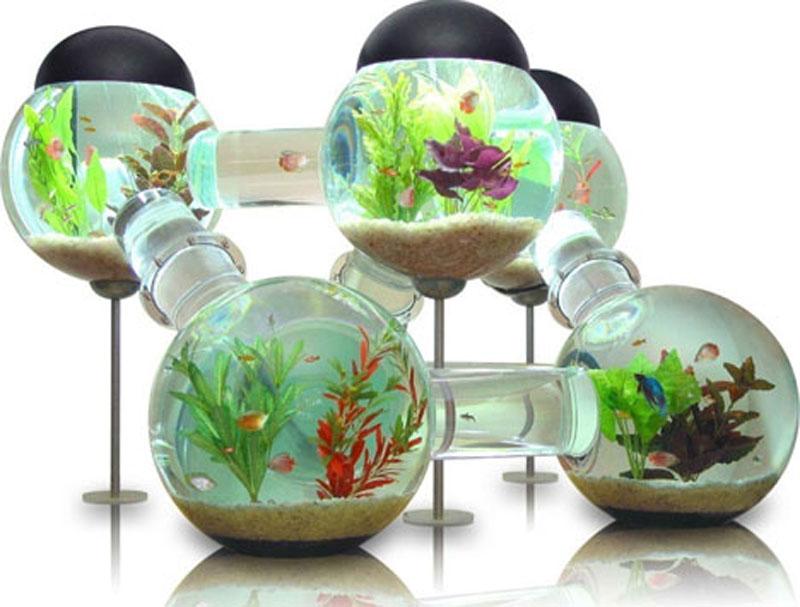 حوض سمك غرائب